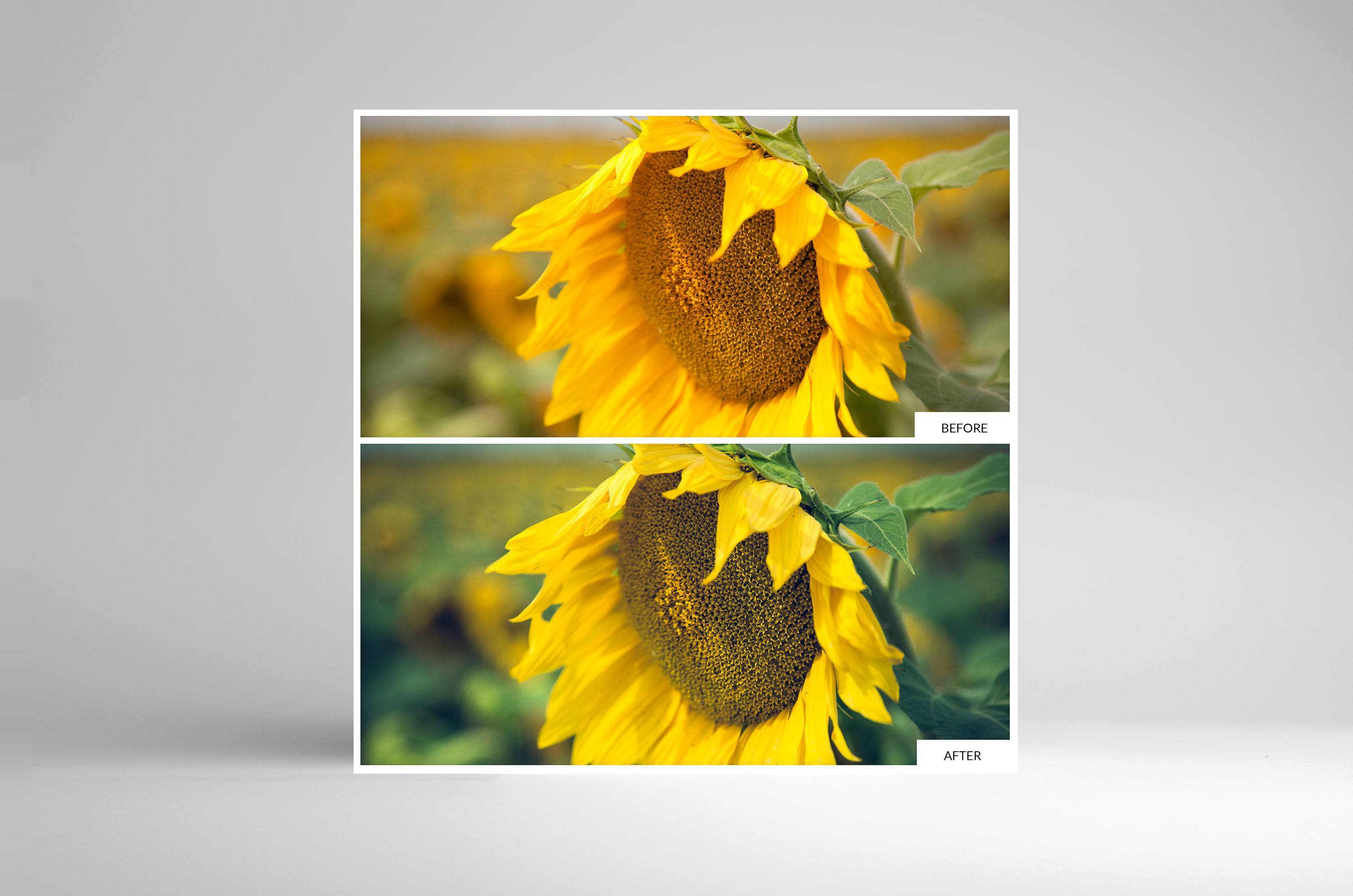 Free Lightroom Preset Sunflower