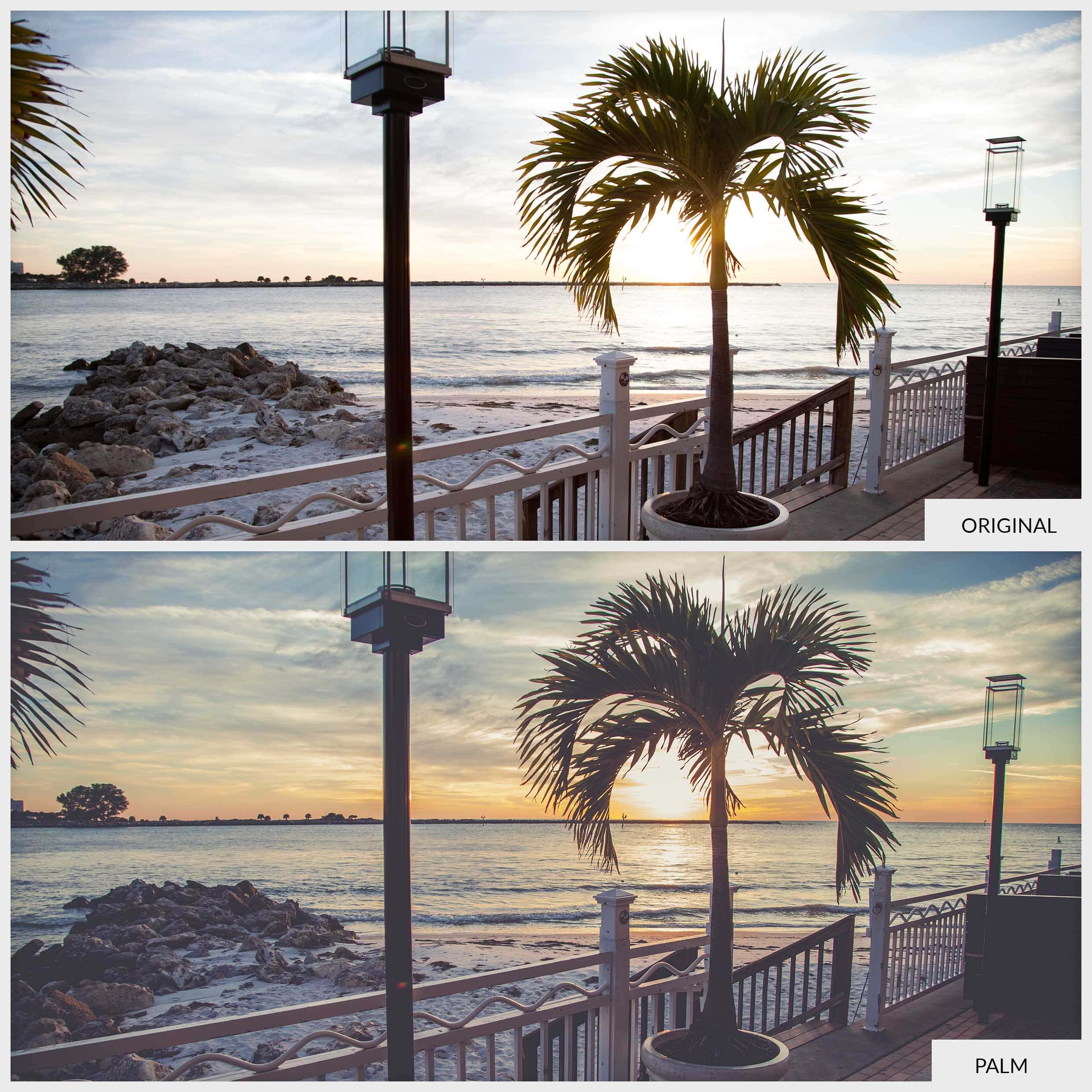 Free Lightroom Preset Palm