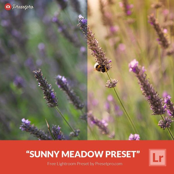 Free-Lightroom-Preset-Sunny-Meadow