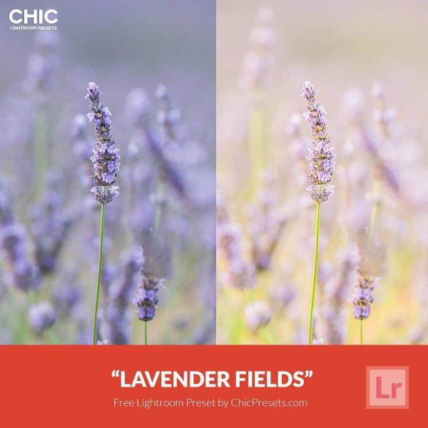 free-lightroom-preset-lavender-fields