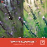 Free-Lightroom-Presets-Sunny-Fields