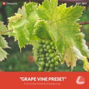 Free-Luminar-Preset-Grape-Vine-Presetpro.com